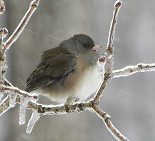 So Cold by NatureGreeting Cards ©ccwri