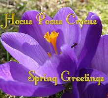 hocus-pocus crocus spring greeting card by loewenherz