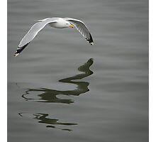 Gull Skimming the Water Photographic Print