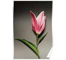 Lily bud. Poster