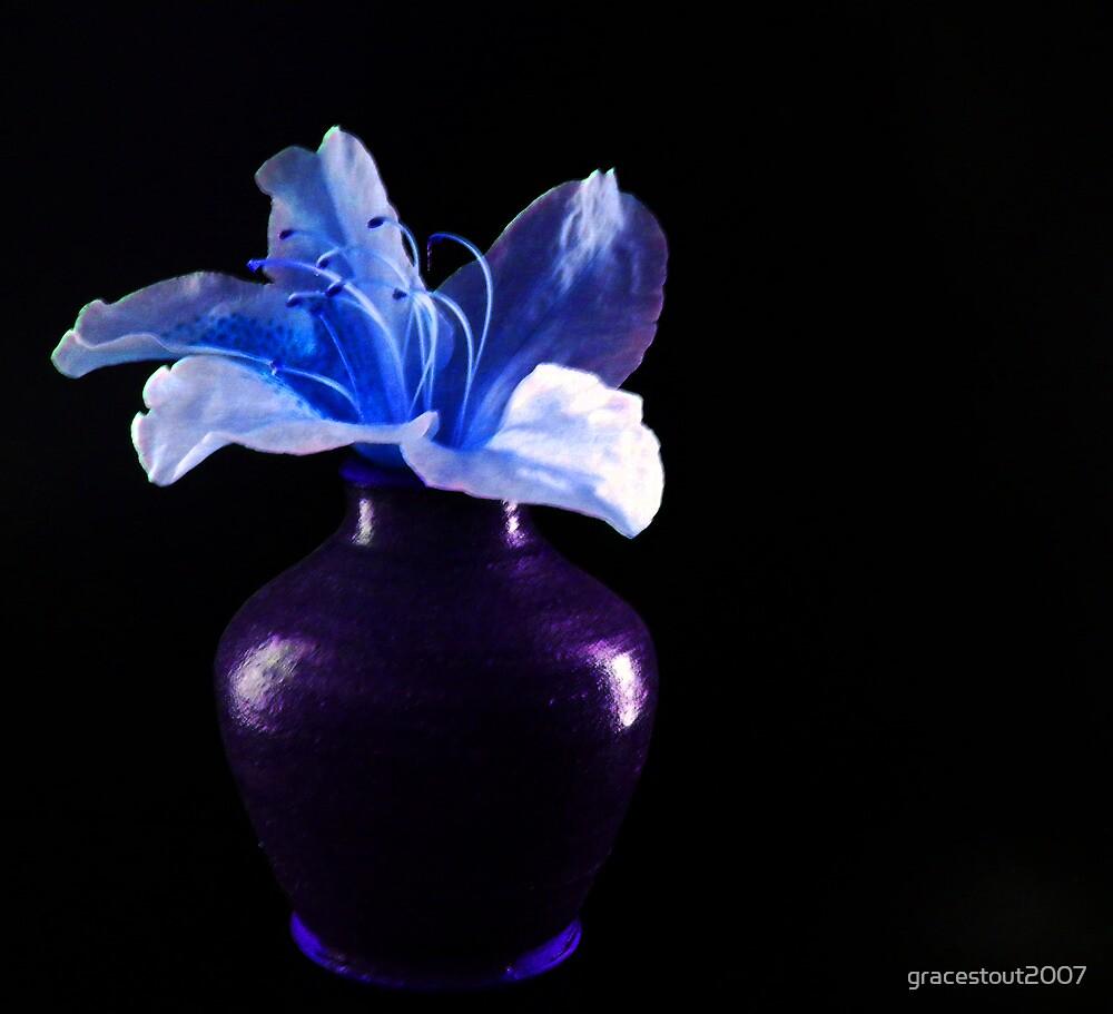 FLOWER IN A VASE by gracestout2007