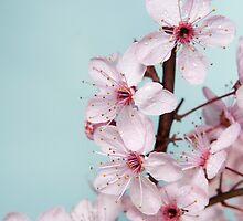 Spring romance. by Ligak