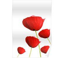 Poppy field. Poster