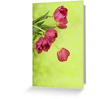 Spring tulips. Greeting Card