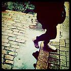 rain by Tony Day