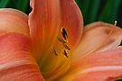 Lily Du Jour by Mike Oxley