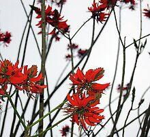 Red Pepper Looking Tree by kyleO