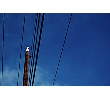 Seagull on a Pole Photographic Print