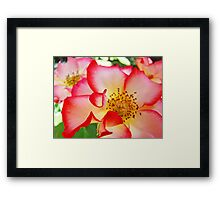 Colorful Bright Rose Pink White Red Flower Baslee Troutman Framed Print