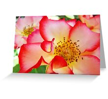 Colorful Bright Rose Pink White Red Flower Baslee Troutman Greeting Card