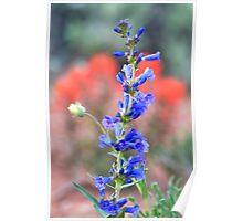 Red, White, & Blue Springtime Poster