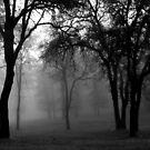 Oaks in the Mist by Leslie Guinan