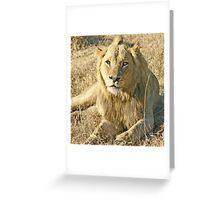 My place-The Sabi Sands Mr.T Greeting Card