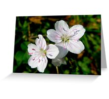 Spring Beauty Wildflower - Claytonia virginica Greeting Card
