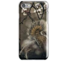 Squirrel in a Cherry Blossom tree iPhone Case/Skin