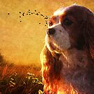 Puppy Sunrise by Stephanie Reynolds