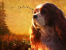 Puppy Sunrise by Sharksladie
