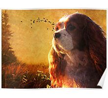 Puppy Sunrise Poster