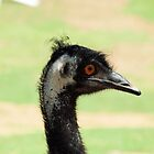 EMU @ NATIONAL ZOO & AQUARIUM by briangardphoto