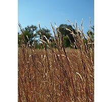 RED GRASSES, MENANGLE NSW  Photographic Print
