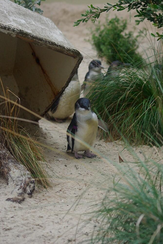 Penguin by blennus