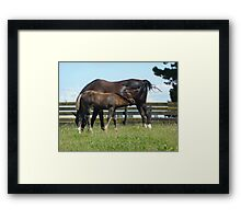 Mare & Foal as One Framed Print