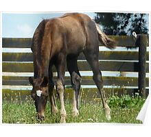 Foal - Solo on Solds Poster