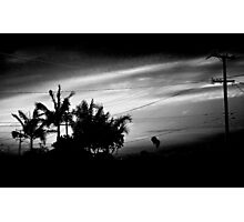 Dramatic palm tree cluster backlit by californian sunset Photographic Print