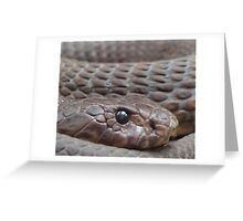 REPTILES @ TARONGA ZOO SYDNEY Greeting Card