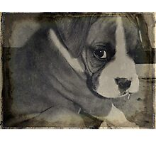 Rocky the Puppy in Black & White Photographic Print