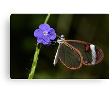 Glasswing at dawn..... Canvas Print