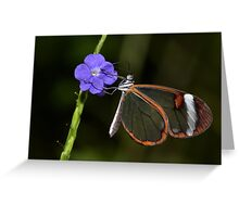 Glasswing at dawn..... Greeting Card