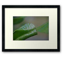 Leaf Painting Framed Print
