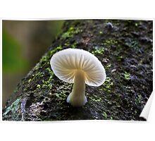 Fungi Season 1101 Poster