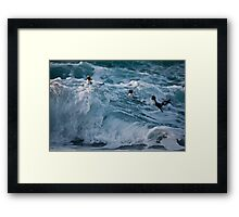 Fiordland Crested Penguin - New Zealand Framed Print