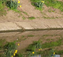 Daffodills in the Spring Reflections  by Stephen Willmer