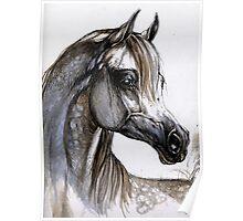the grey arabian horse portrait Poster