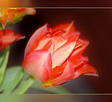 RedTulips by RosiLorz