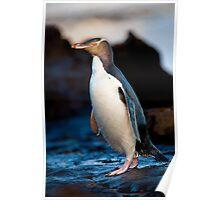 Yellow-eyed Penguin - New Zealand Poster