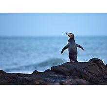 Yellow-eyed Penguin - New Zealand Photographic Print