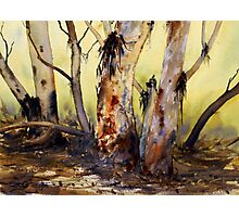 River Red Gum, Flinders Ranges, South Australia Photographic Print