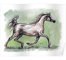 grey  arabian horse Poster
