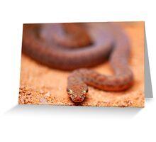 Dwarf Python Greeting Card