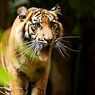 Roar! by Josie Eldred