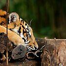 Sleeping Stripes by Josie Eldred