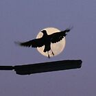 Magpie Moon by Amy Dee