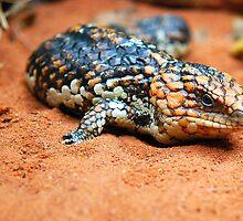 Shingleback Lizard by voir