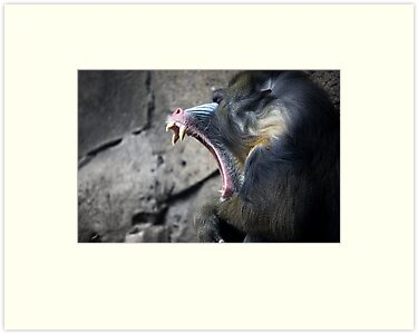 mandrill. by caradione