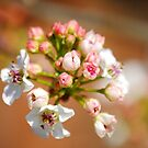 Spring Bokeh by Doyle  McClung
