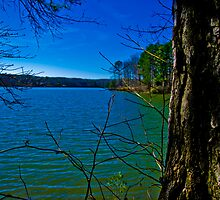 Lakeview from Large Tree by DBGuinn